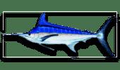 Deep Sea Fishing Blue Marlin