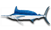 Deep Sea Fishing Longbill Spearfish