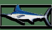 Deep Sea Fishing White Marlin