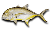 Nearshore Fishing Crevalle Jack