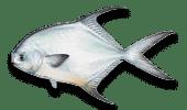 Nearshore Fishing Permit