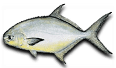 Nearshore Fishing Pompano