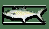 Nearshore Fishing Spanish Mackerel