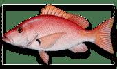 Offshore Fishing Blackfin Snapper