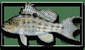 Offshore Fishing Rock Sea Bass